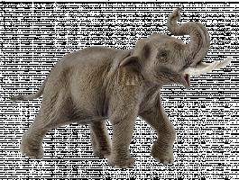 Schleich Asiatischer Elefantenbulle | 14754