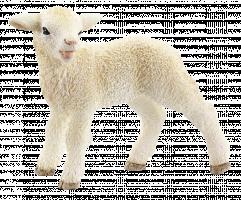 Schleich Farm Life 13744 Jehně