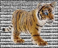 Schleich Wild Life 14730 Tygr mládě